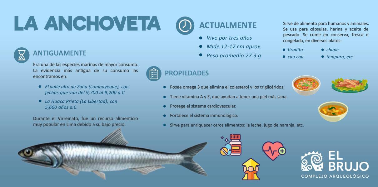 anchoveta infografoa